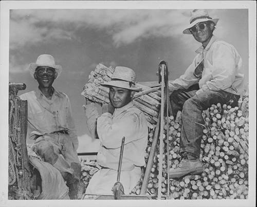 Historical black & white photo of three men posing near what appear to be sugar cane cuttings.